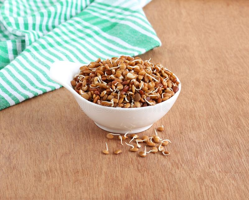 Sprouted Horse Gram Healthy Indian Food royalty free stock photo