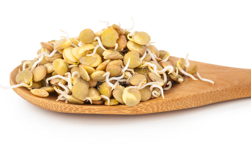 Sprouted lentils. On white background stock photography