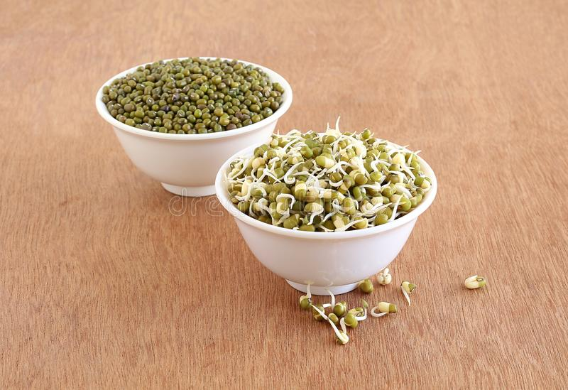 Healthy Vegetarian Food Sprouted Moong or Mung in a Bowl. Sprouted moong, mung or green gram, organic type, a healthy vegetarian food in bowl, and in the royalty free stock photography