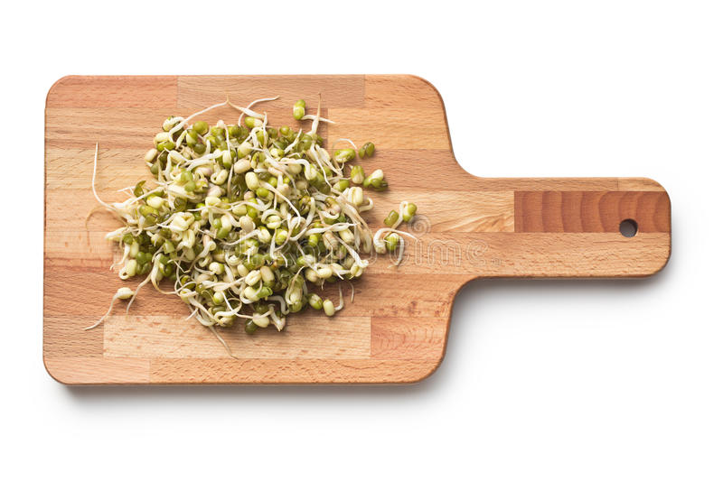 Sprouted mung beans royalty free stock photos