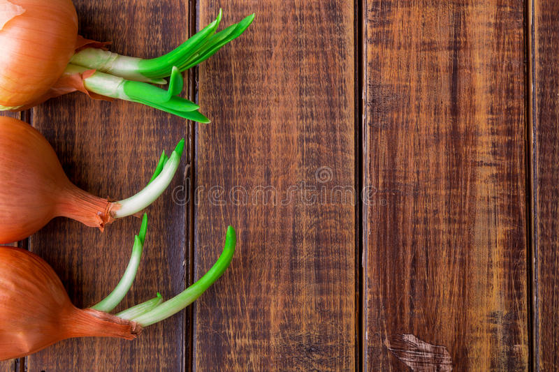 Sprouted onion on wooden background. Copy space. Frame. Sprouted onion on wooden background. Copy space. Frame royalty free stock images