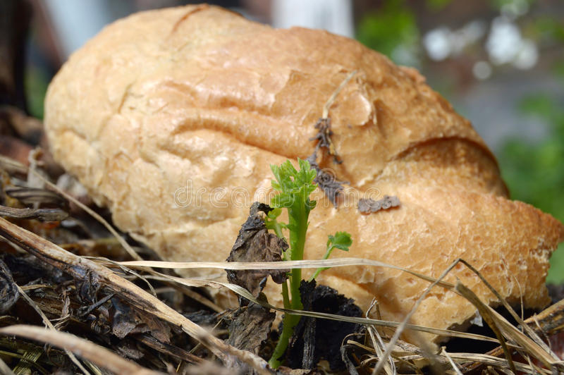 Sprouted potatoes and spoiled bread royalty free stock photos