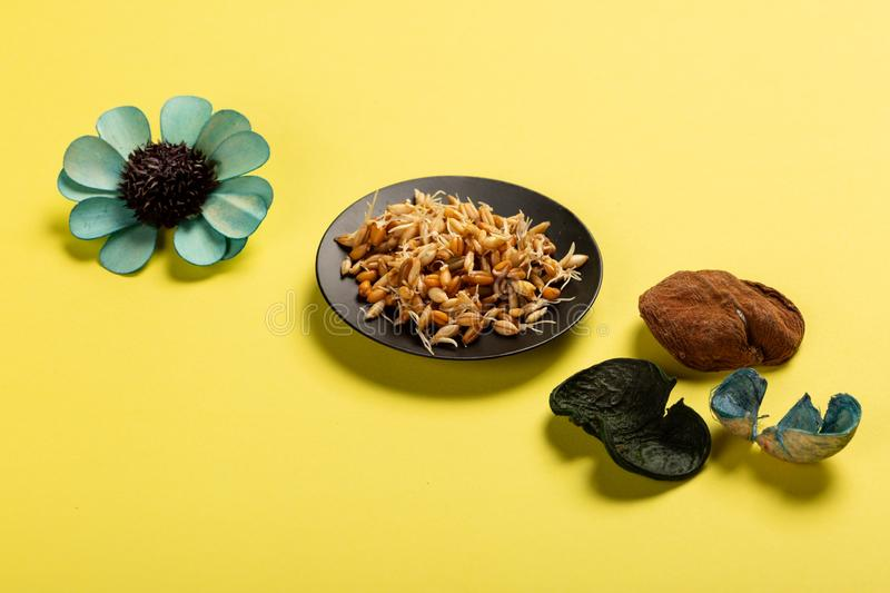 Sprouted seeds on plate on yellow background with flowers royalty free stock image
