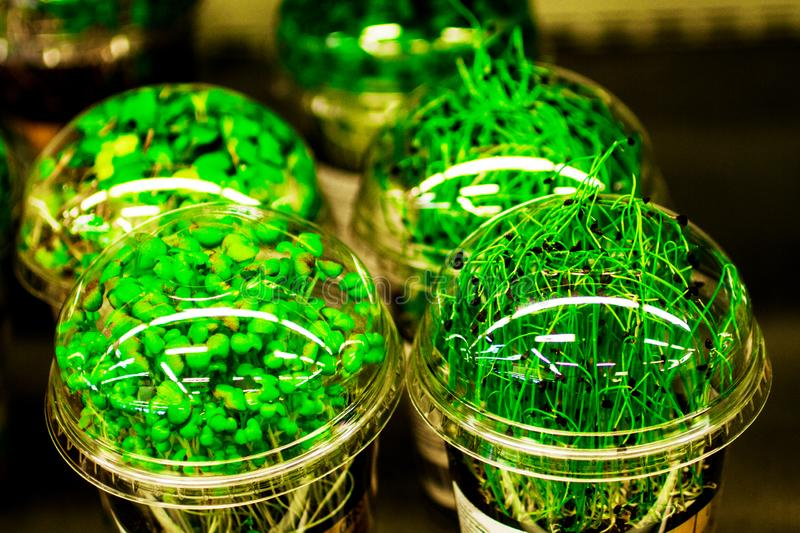 Green herbs in jars at the store stock photos
