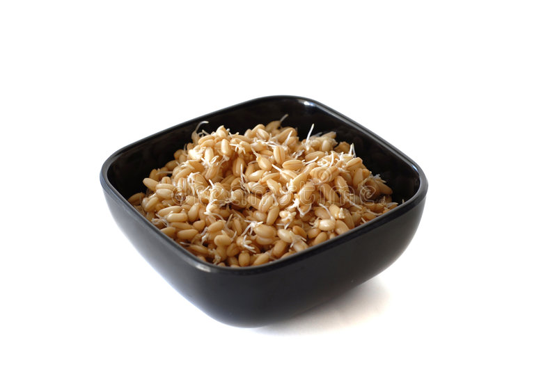 Download Sprouted Wheat Berries stock image. Image of sprouted - 5981965