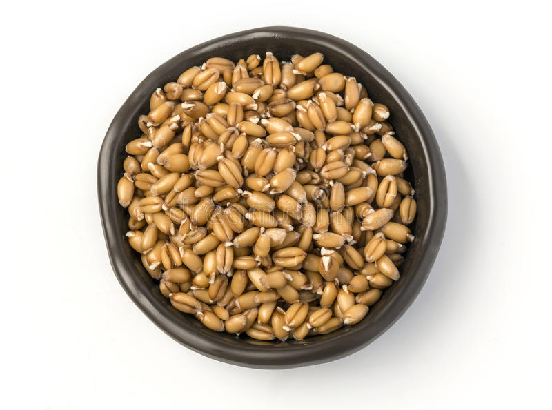 Sprouted wheat germ in a bowl. Isolated on white background stock photos