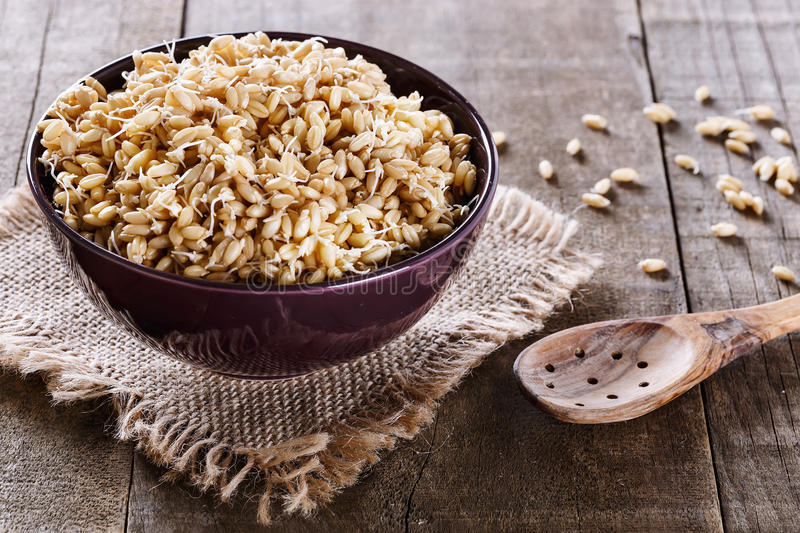 Sprouted wheat germ in a bowl. Over rustic wooden background stock photos