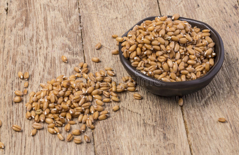 Sprouted wheat germ. In a bowl over rustic wooden background royalty free stock images