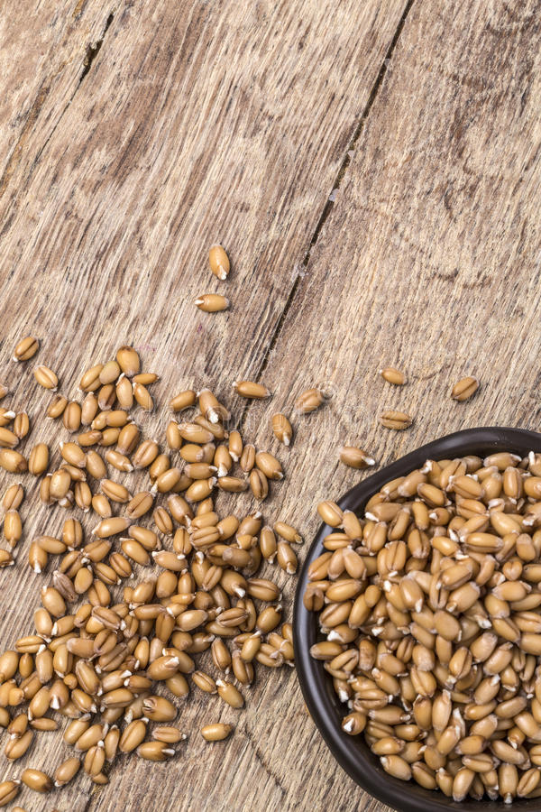 Sprouted wheat germ. In a bowl over rustic wooden background royalty free stock photography