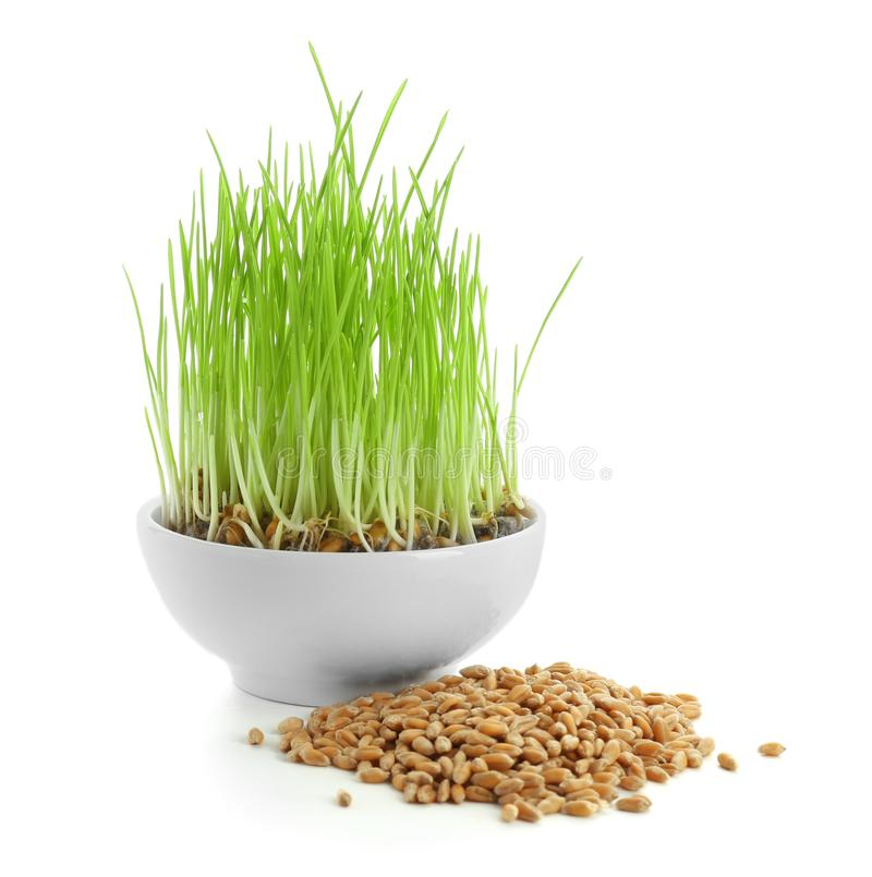 Sprouted wheat grass and grains on white background royalty free stock photos