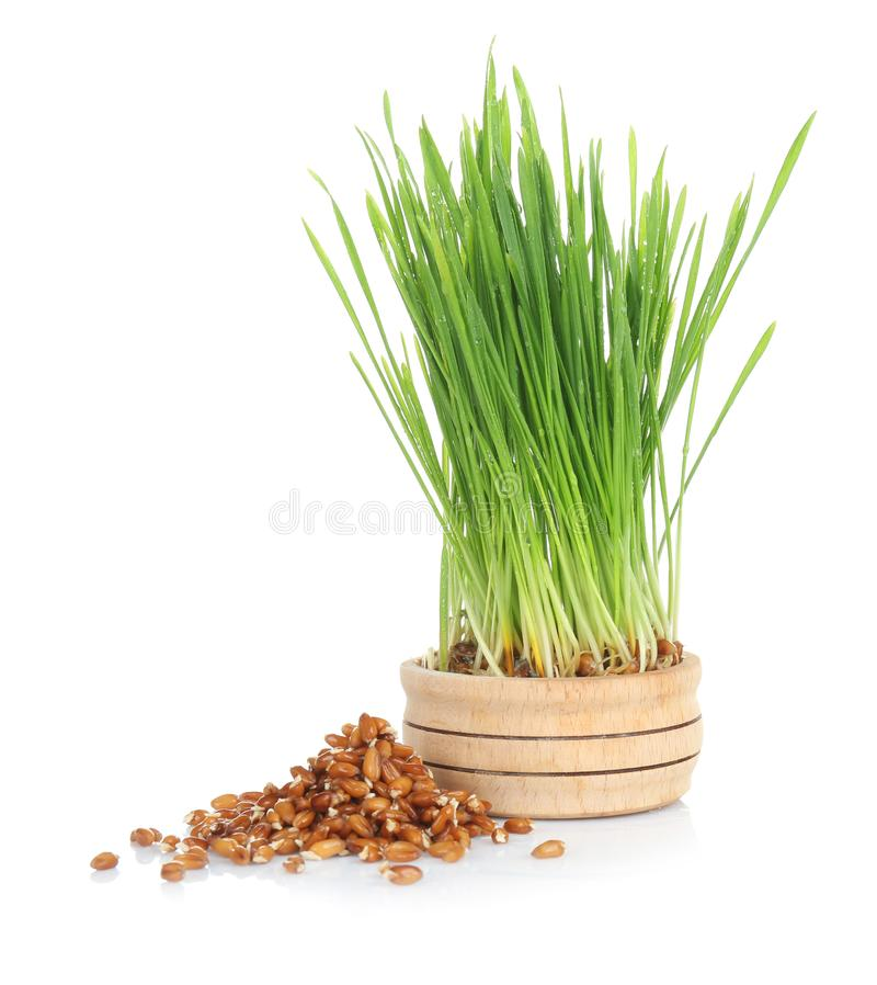 Sprouted wheat grass and seeds on white background royalty free stock images