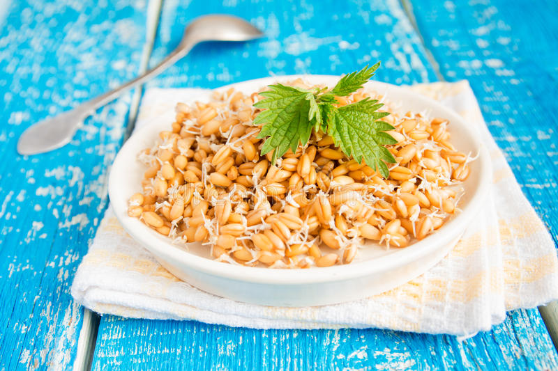 Sprouted wheat seeds with mint. On plate and wooden background, close up, selective focus royalty free stock images
