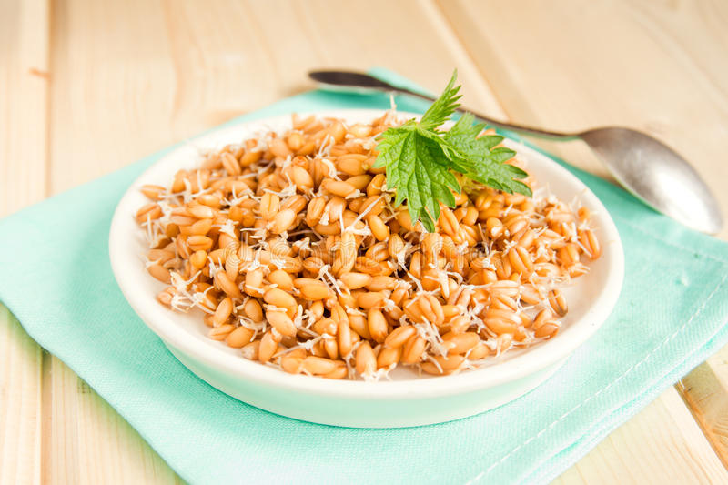 Sprouted wheat seeds. With mint on plate and wooden background, close up, selective focus stock photo