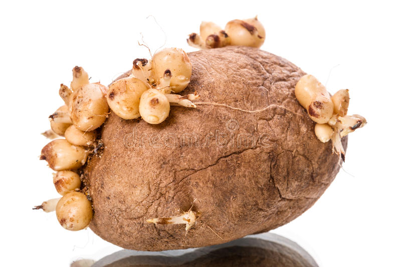 how to stop seed potatoes sprouting