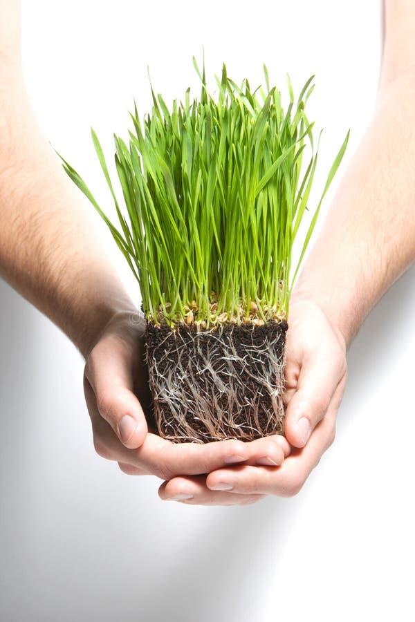 Sprouts da grama da terra arrendada imagens de stock