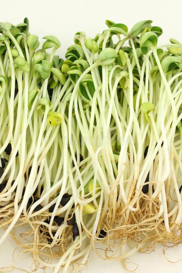 Sprouts de feijão foto de stock