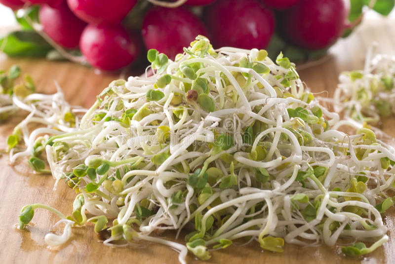 Sprouts do Radish imagem de stock