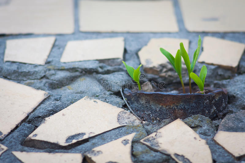 Sprouts growing from the pavement. Sprouts in the city growing from the pavement royalty free stock photography