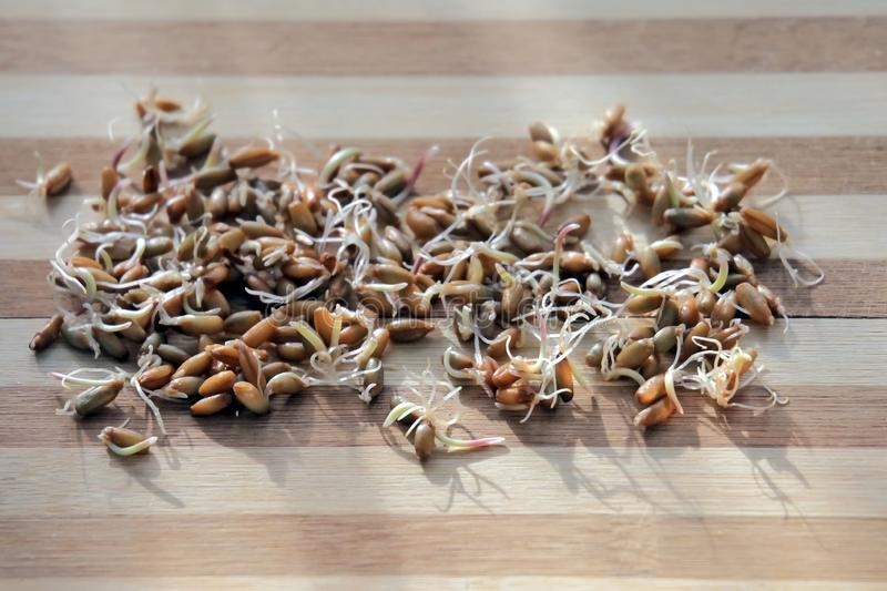 Sprouts of a rye on wooden background stock images