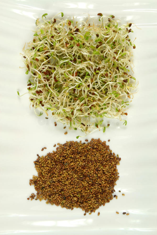 Sprouts and seeds royalty free stock photos