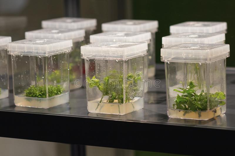 Sprouts of various plants sprout in containers stock image