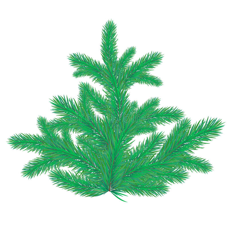 Download Spruce stock vector. Image of festival, january, spruce - 11230134