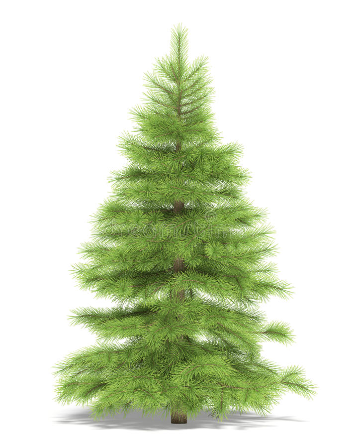 Download Spruce stock illustration. Illustration of green, picea - 13208035