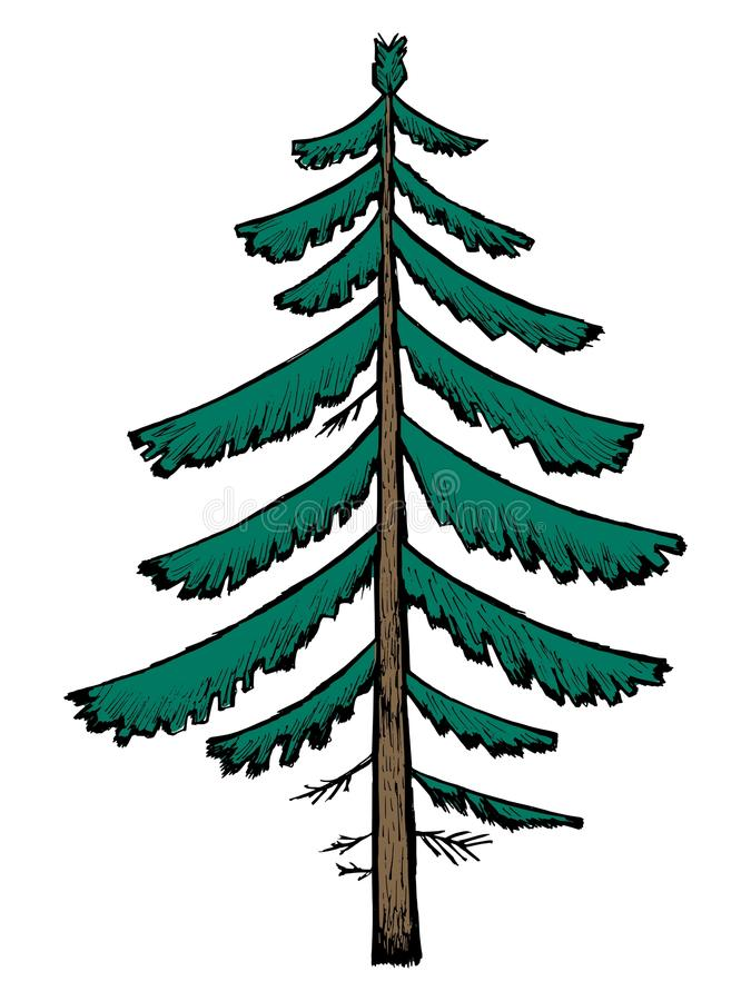 Download Spruce stock vector. Image of greenwood, isolated, wood - 28445975