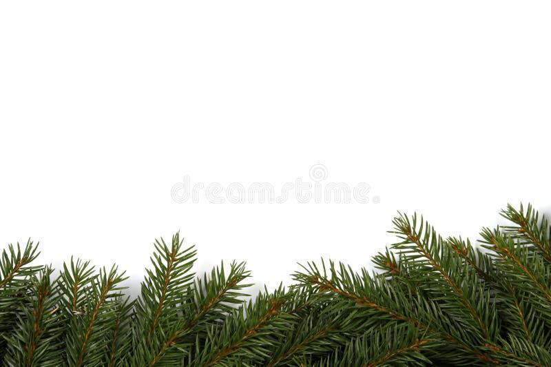 Spruce background stock image