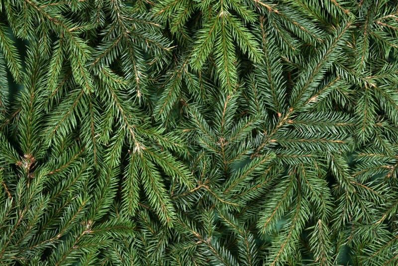Spruce background royalty free stock photo