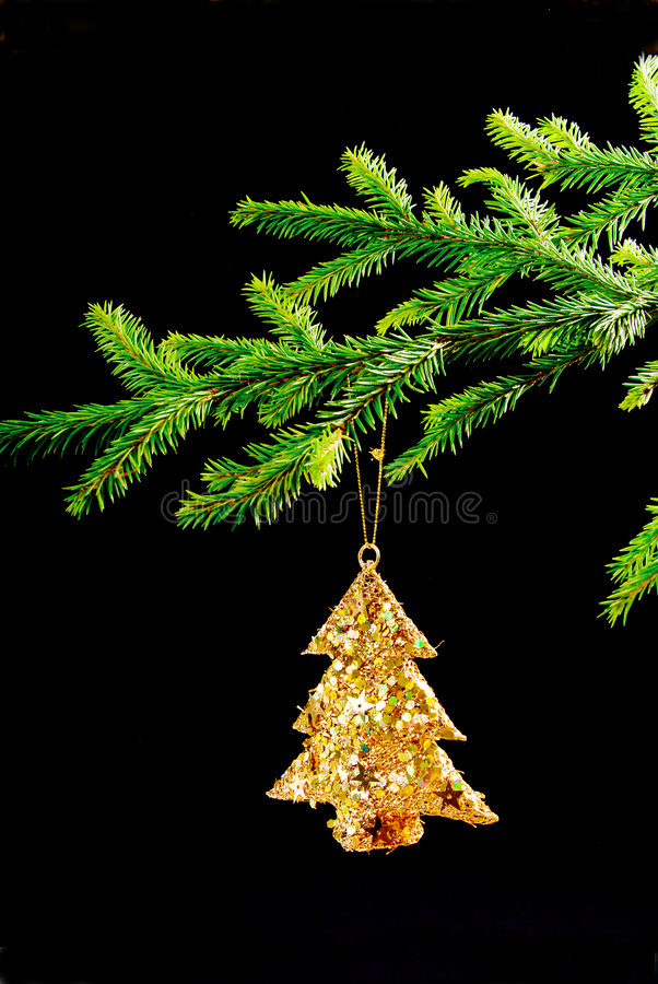 Download Spruce branch on the dark stock photo. Image of decoration - 6560548