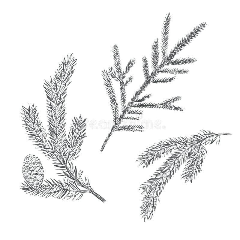 Spruce branch set. Collection of fir-tree. Vector illustration. Pine sketch stock illustration