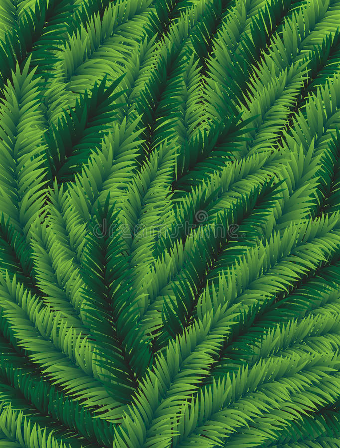 Spruce Branches Stock Photography