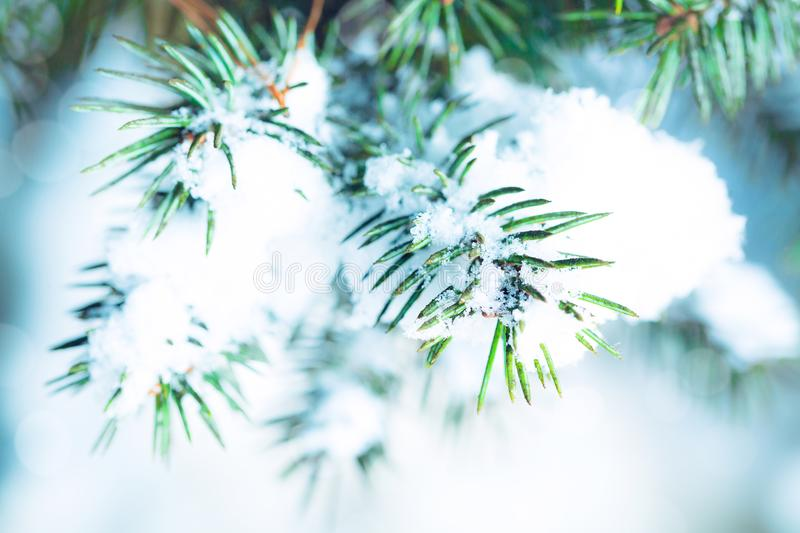 Spruce branches with snow in winter forest. Close up artistic image. Natural winter background. Abstract christmas card. stock image
