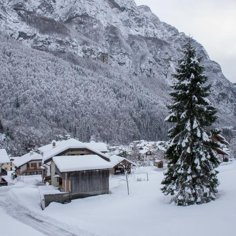 Spruce covered with snow. Winter, snow, landscape, mountain, home, cold, trees, forest, christmas, nature, white, village, sky, snowy, ski, woods, bungalow stock image