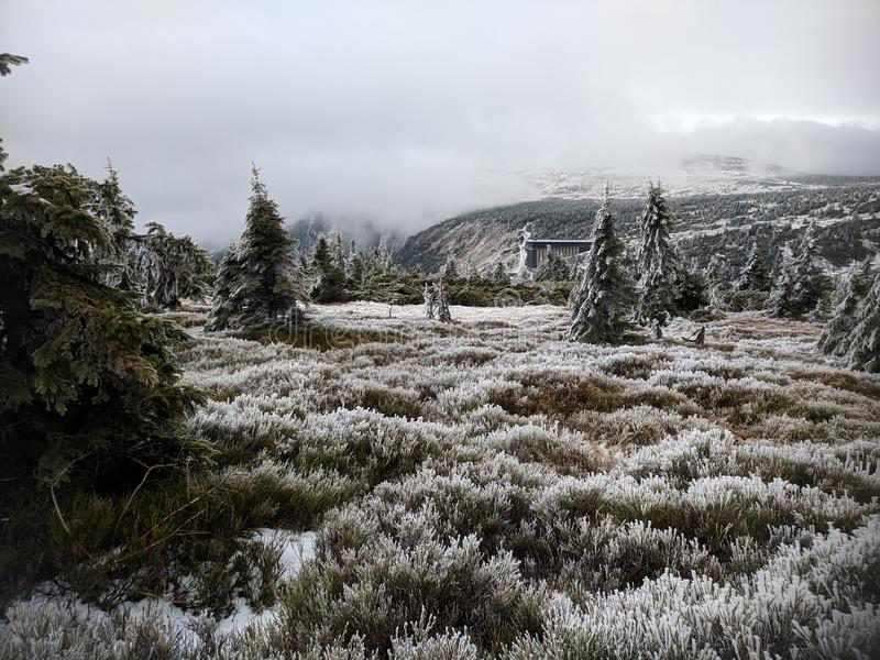 Spruce forest during frost royalty free stock photos
