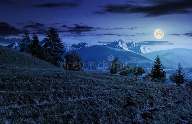 Spruce forest on grassy hillside in tatras at night stock photo