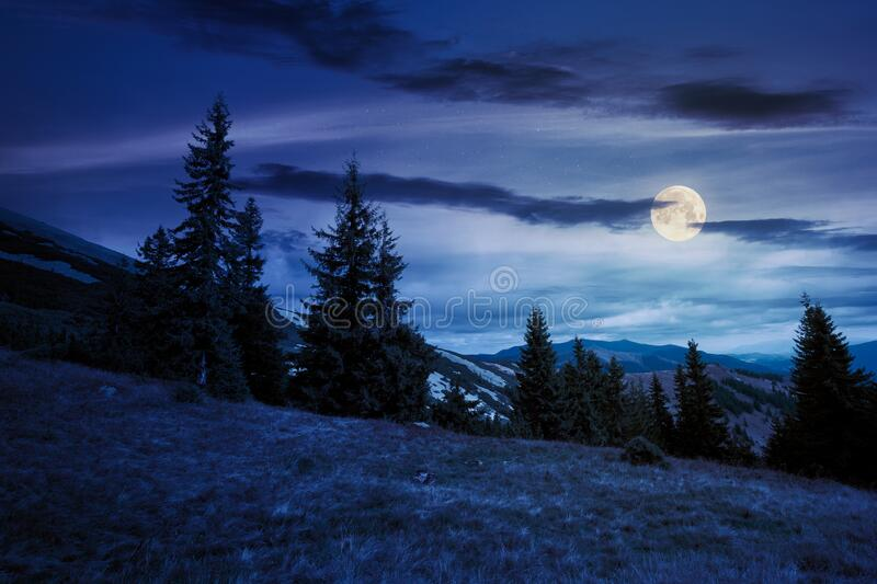 spruce forest on the hillside meadow at night royalty free stock photo