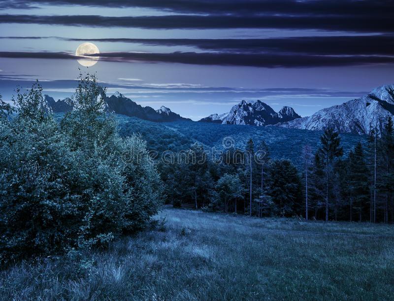 Spruce forest on a meadow in Tatras at night stock photos