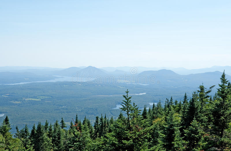 Spruce forest and misty mountains royalty free stock photo