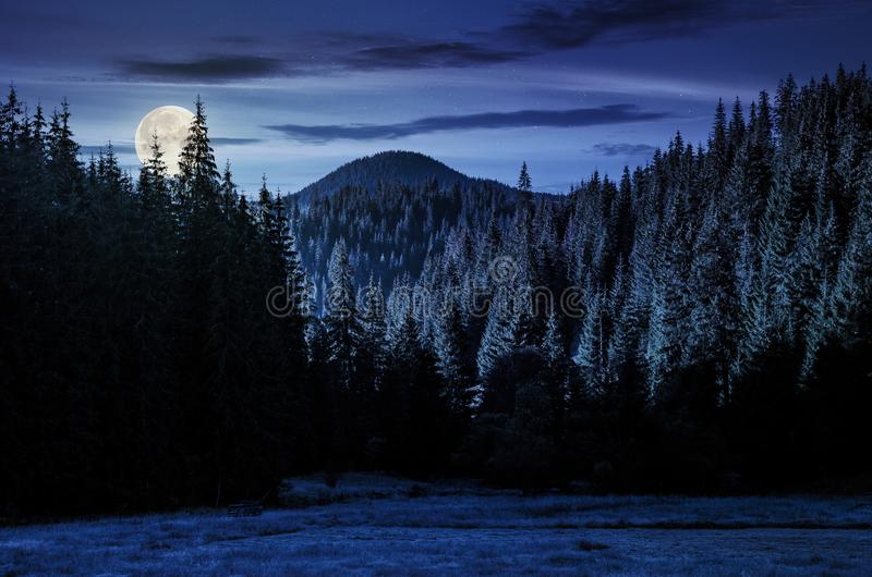 Spruce forest in mountains at night stock photos