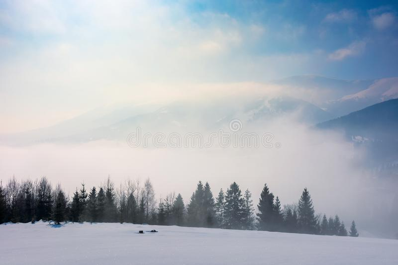Spruce forest on a snow covered mountain meadow. Beautiful winter landscape with distant ridge. wonderful sunny weather with fog and mist in the valley stock photo