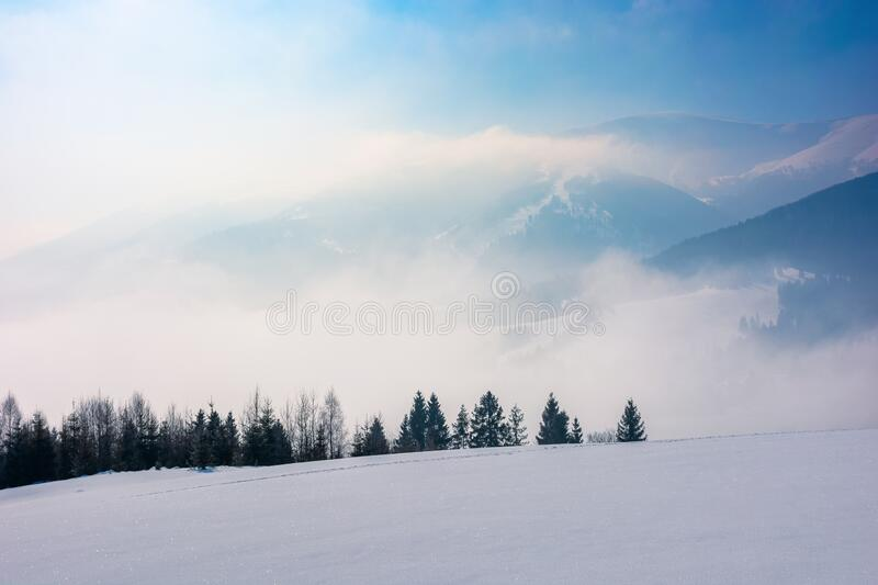 Spruce forest on a snow covered mountain meadow. Beautiful winter landscape with distant ridge. wonderful sunny weather with fog and mist in the valley royalty free stock photos