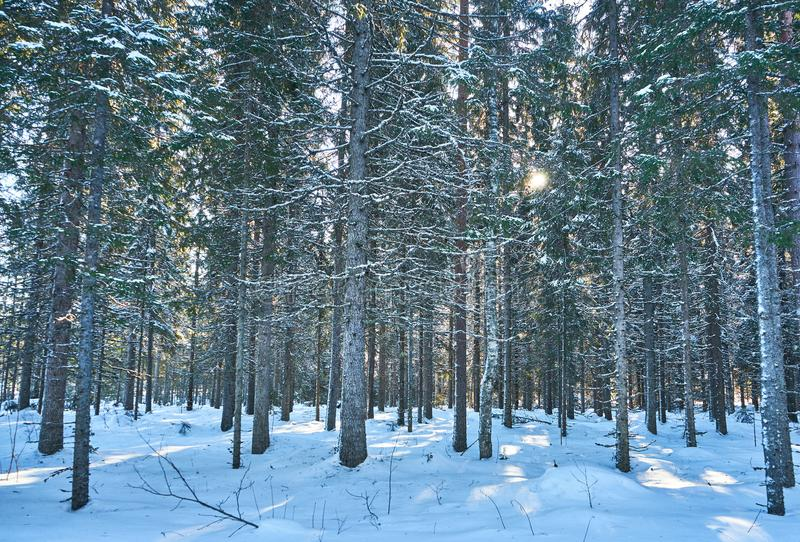 Light playing on snow in sunny winter day royalty free stock photos
