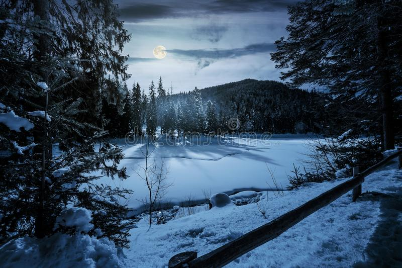 Spruce forest on winter night in full moon light stock photography