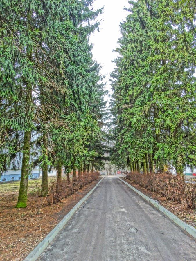 Spruce gränd royaltyfri foto