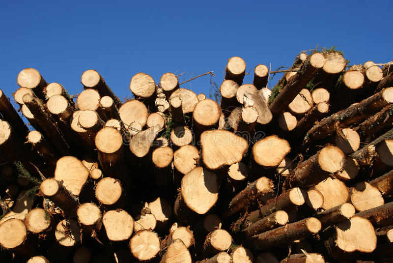 Download Spruce Logs Stacked With Blue Sky Background Stock Photo - Image: 16797984