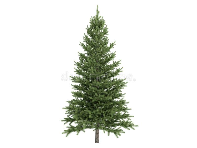 Spruce_ (Picea) ilustración del vector