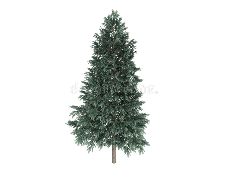 Download Spruce_(Picea_abies) Stock Images - Image: 9820074