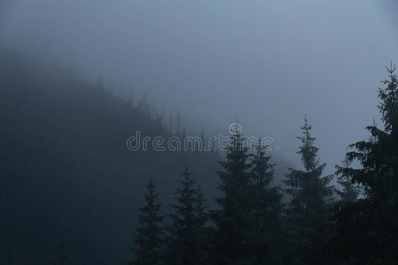 Spruce in thick fog in mountains. Spooky spruce in thick, like a fairy tale, fog in the Tatra mountains. Photo taken in November 2018 on the road to Lake Sea royalty free stock image